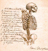 antique anatomy prints 02