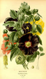 Antique flower floral prints and illustrations image collection 01