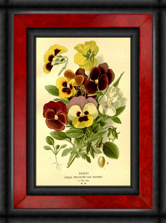 Antique flower floral prints and illustrations image collection 17