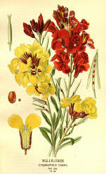 Antique flower floral prints and illustrations image collection 03
