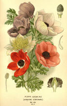 Antique flower floral prints and illustrations image collection 04