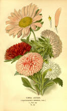 Antique flower floral prints and illustrations image collection 06