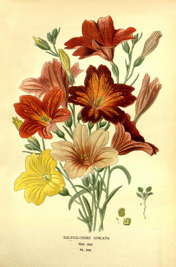Antique flower floral prints and illustrations image collection 15