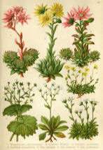 Antique flower floral prints and illustrations image collection 12
