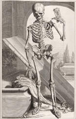 antique anatomy prints 05