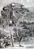 antique anatomy prints 10