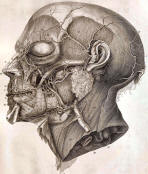 antique anatomy prints 09