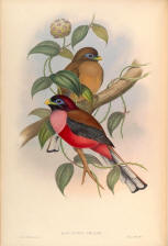 Antique bird prints image collection 01