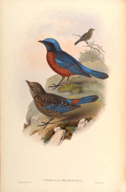 Antique bird prints image collection 12
