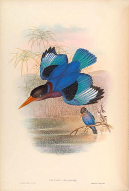 Antique bird prints image collection 13
