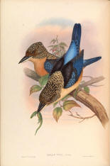 Antique bird prints image collection 02