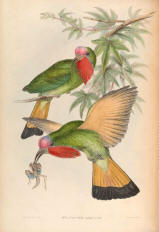 Antique bird prints image collection 04