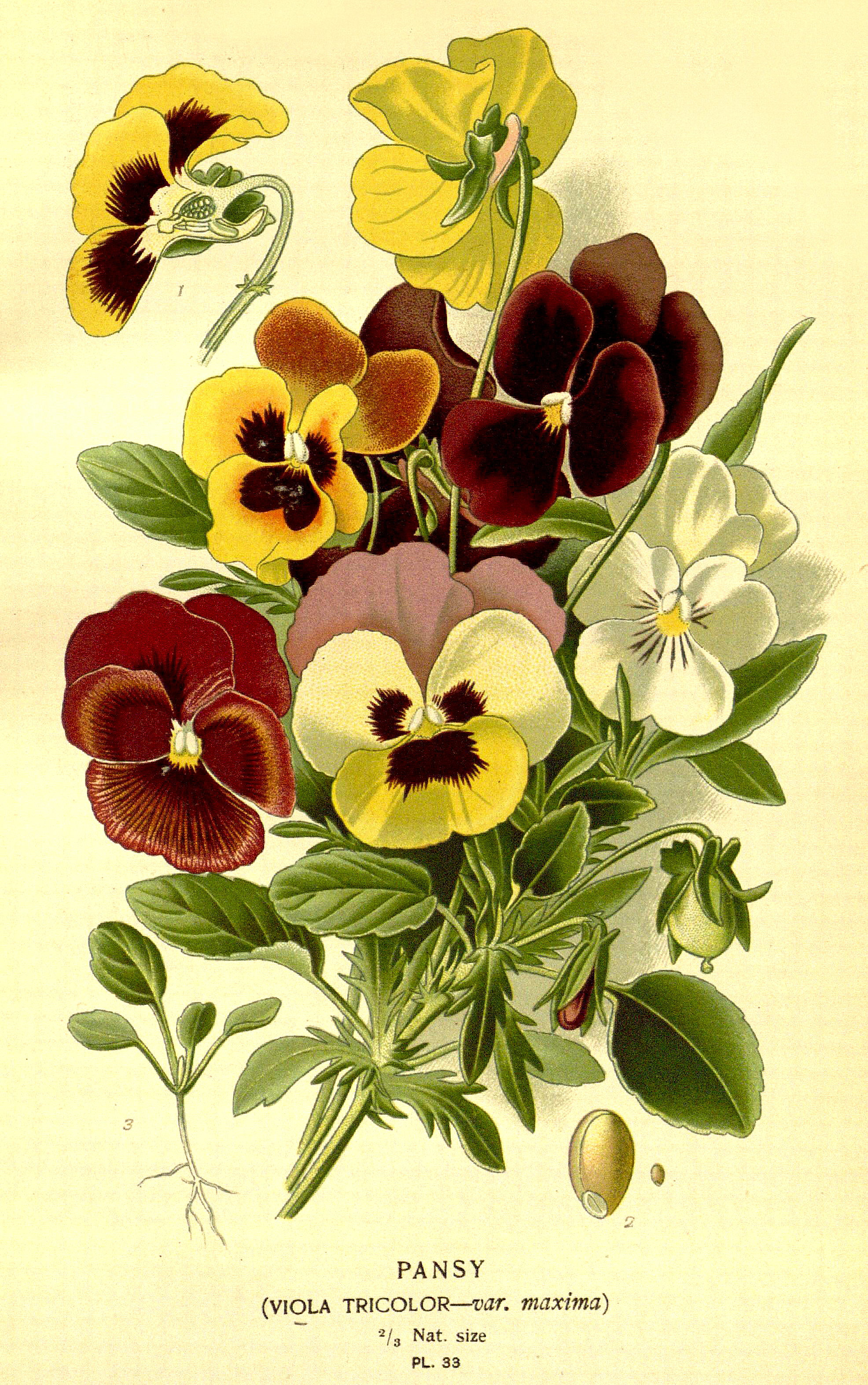 Antique Flower Print